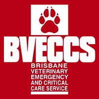 emergency vet brisbane